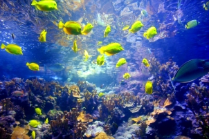 Coral Reefs Maui, Hawaii