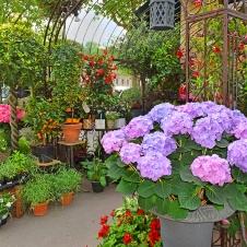 Small Flower Shop On The Street Paris